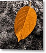 November Leaf Metal Print