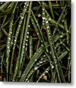 November Raindrops On Grass #1 Metal Print