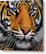 November Tiger Metal Print by Jurek Zamoyski