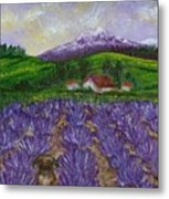 Nui In Lavender Field Metal Print