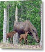 Nursing Moose Metal Print