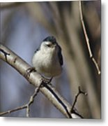 Nuthatch On Perch Metal Print
