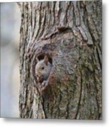 Nutty Squirrel Surprise  Metal Print