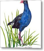 Nz Native Pukeko Bird Metal Print
