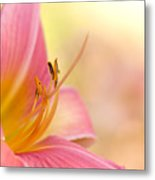 O That Summer Passion Metal Print