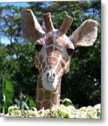 Oahu Giraffe Metal Print