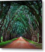 Oak Alley Road Metal Print by Perry Webster