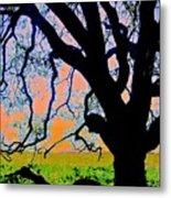 Oak At Elkhorn Metal Print