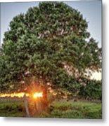 Oak At Sunset Metal Print