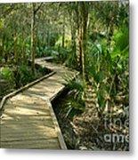 Oak Hammock Trail, Florida Metal Print