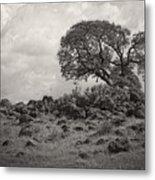 Oak In Rock Field Metal Print