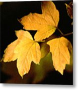Oak Leaf Trio Metal Print