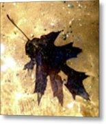 Oak Leaf Underwater Metal Print