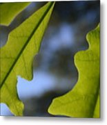 Oak Leaves Abstract Designed By Nature Metal Print