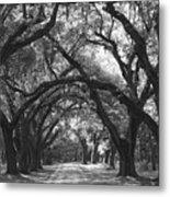 Oak Lined Drive Way, Coastal, South Carolina  Metal Print