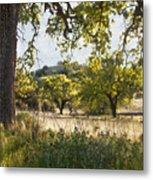 Oak Meadow Metal Print