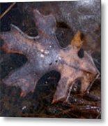 Oak Preservation Metal Print