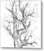 Oak Tree Abstract Study Metal Print