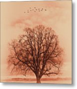 Oak Tree Alone  Metal Print