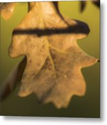 Oak Tree Leaf Metal Print