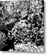 Oak Tree Light Metal Print