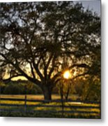 Oak Tree Sunset Metal Print