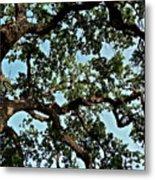Oak Tree Three Metal Print