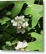 Oakleaf Hydrangea Floral Metal Print