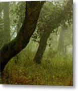Oaks Off The Trail Metal Print