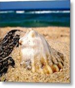 Ocean Beyond A Shell Metal Print