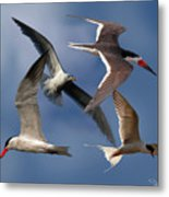Ocean Bird Collage Metal Print