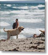 Ocean Dog Metal Print