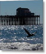 Oceanside Resident Photograph Metal Print