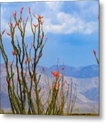Ocotillo Cactus With Mountains And Sky Metal Print