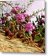 Ocotillo Wilds Metal Print
