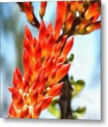 Octillo Flower. Metal Print