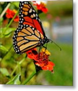 October Butterfly Metal Print