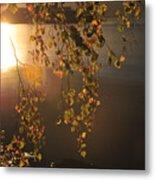 October Light Metal Print