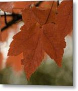 October Red Metal Print