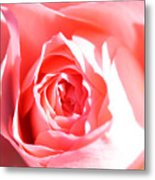 October Rose Close Up Metal Print