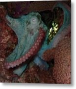 Octopus On Night Dive Metal Print