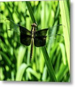 Odanate With Wings Spread Metal Print