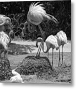 Odd Bird Out In Black And White Metal Print