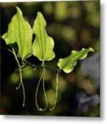 Of Veins And Tendrils Metal Print