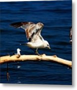 Off You Gull Metal Print