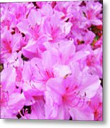 Office Art Azalea Flowers Botanical 31 Azaleas Giclee Art Prints Baslee Troutman Metal Print