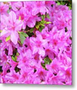 Office Art Azaleas Flower Art Prints 1 Azalea Flowers Giclee Baslee Troutman Metal Print