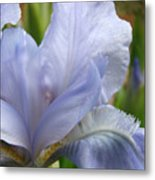 Office Art Blue Iris Flower Floral Giclee Baslee Troutman Metal Print