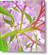Office Art Botanical Hydrangea Flowers Giclee Art Prints Baslee Troutman Metal Print