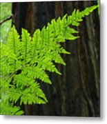 Office Art Ferns Art Redwood Tree Forest Fern Giclee Prints Baslee Troutman Metal Print
